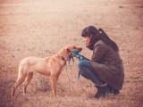 La relation entre l'homme et le chien