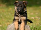 Les 10 plus beaux chiens