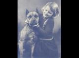 Les pitbulls, des «chiens nounous» pour les enfants?