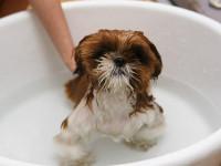 Comment donner un bain à son chien ?
