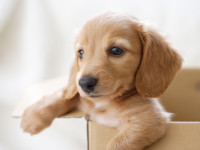 Adopter un chiot dans une animalerie