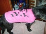 Chien Winy,con su nuevo abrigo - Cairn Terrier Femelle (11 mois)