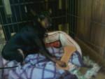 Chien minpin - Pinscher nain Femelle (2 ans)