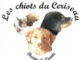Les chiots du Ceriseau