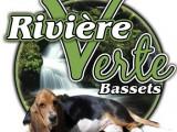 Rivière verte Bassets