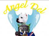 Angel del ronda casa
