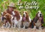 La truffe en Quercy