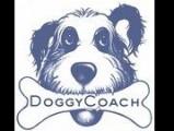 Doggycoach
