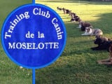 Training club canin de la moselotte