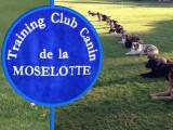 Training club canin de la moselotte