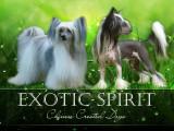 Exotic spirit