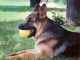 Educateur canin Roanne