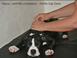Fabienne Boi, Ostéopathe canin/félin