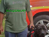 Dogsakay