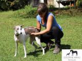Elodie Quenechdu - Ostéopathe animalier