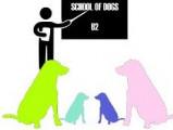 School of dogs 62