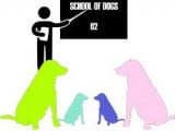 School of dogs 62