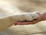 Ostéopathe canin et félin