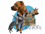 Education-Canine91