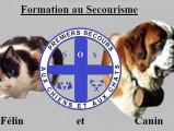 Saint-bernard formation - secourisme canin