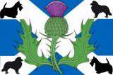 Des chardons écossais