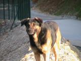 Educateur canin comportementaliste