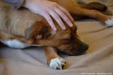 Pauline Puyenchet - Ostéopathie Animale