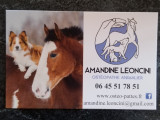 Ostéopathe Animalier Leoncini Amandine