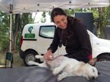 Christelle Poncie ostéopathe et masseur pour chiens