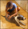 So Sweet Doggy - Massage pour chien
