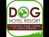 Dog Hotel Resort