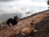 Des chiens et des forêts
