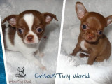 Grisous'Tiny World
