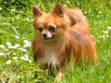 Élevage Ling Dechen