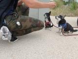 Canis-Felis & Co