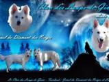 Du Clan des Loups de Givre