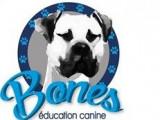 Bones Education