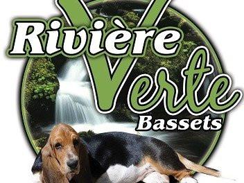 Riviere Verte Bassets Elevage De Basset Hound A Isle Verte