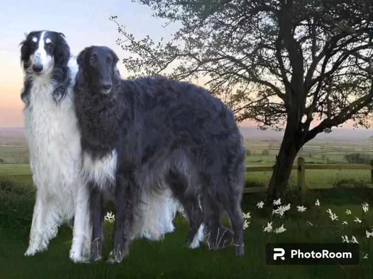 Domaine D Iasnaia Poliana Elevage De Barzoi A Val Fouzon