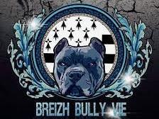 Breizh Bully Vie Elevage De American Bully A Locoal Camors
