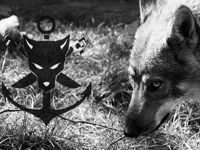 L Ancre Des Loups Elevage De Chien Loup Tchecoslovaque A Charleroi