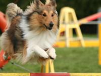 Les disciplines de sport canin