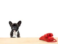 Législation & Formalités relatives aux chiens