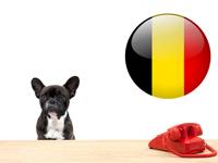 Législation & Formalités relatives aux chiens en belgique