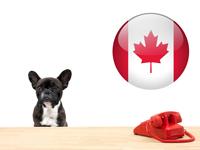 Législation & Formalités relatives aux chiens au canada