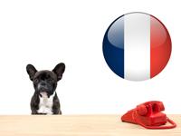 Législation & Formalités relatives aux chiens en france
