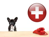 Législation & Formalités relatives aux chiens en suisse