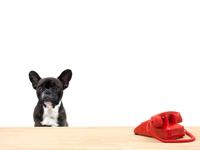 Législation & Formalités relatives pour voyager avec son chien