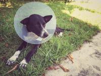 Les maladies du chien et leurs symptômes