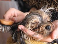 Toilettage & Entretien du chien